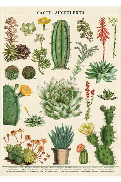 Cavallini Poster Succulent in the group Home and stuff / Office and stationary at Sivletto - Skylark AB (Cavwrap-su)