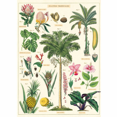Cavallini posters plantes tropicales in the group Home and stuff / Office and stationary at Sivletto - Skylark AB (Cawwrap-trop)